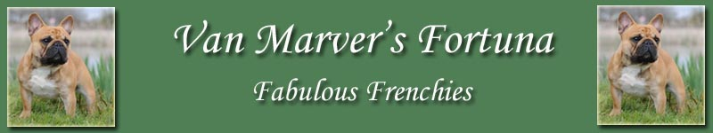 Banner_marvers